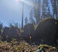 Steinzeit auf dem Homberg